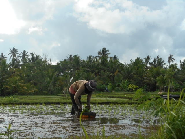 rijstboer Ubud Bali Indonesië Zuid Oost-Aziê