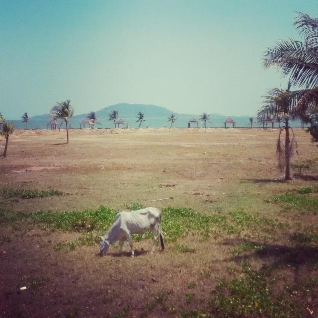 Kep palmbomen, zicht op Rabbit Island, Kep, Cambodja, Zuid Oost-Azië